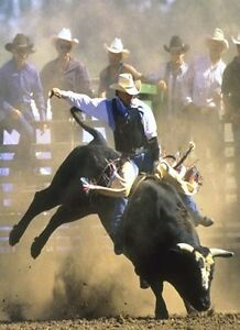 Pairs for Pro Bull Riding Championships in Moose-Jaw  June 2-3