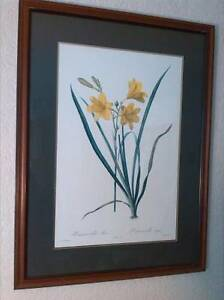 Botanical Painting w/ frame