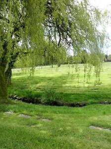 Forest Lawn Cemetery Plot - Willow Tree / Creek