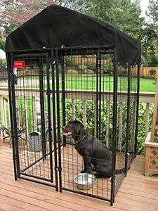 lucky dog;kennel