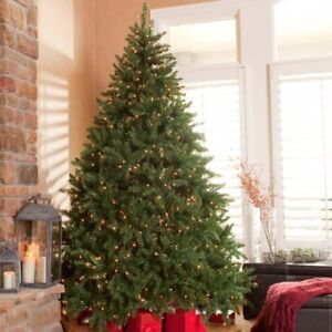 6.5'-10.5' Norwich, White Spruce, Evergreen Pine Trees, 1449 Tip