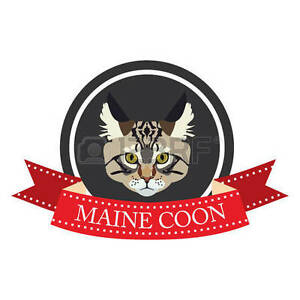Wanted: Maine Coon