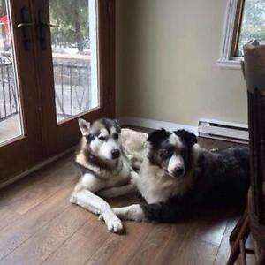 Lost Dogs!!! West Island Greater Montréal image 1