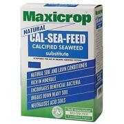 Calcified Seaweed