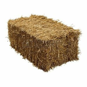 Looking for square hay bales