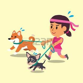 Olympic Dogs, dog walking/cat sitting services