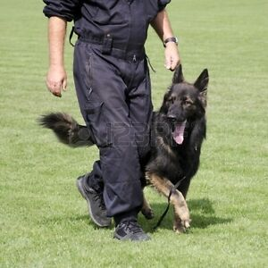 Obedience training provided by Retired RCMP Officer