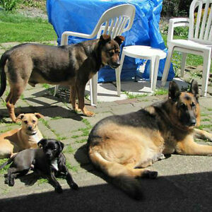 COME TO ME DOG TRAINING, BOARDING AND DAYCARE(central Coquitlam)
