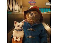 TOM's Film Club: Paddington (2014)