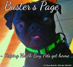 Lost/ Found Pets - Buster's page Helping North Bay Pets get home
