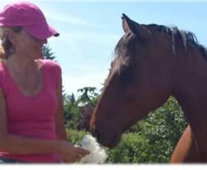 Cute Standardbred mare for sale