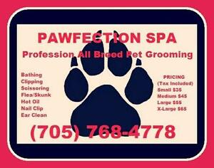 Pawfection Grooming Spa * Low prices starting at $35 and up*