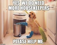 House cleaning needed