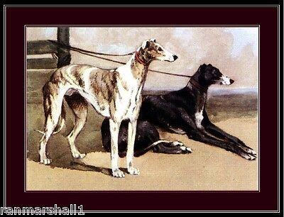 English Print Greyhound Dog Duo Art Picture