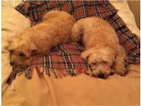 Dog Walker & Sitter Needed