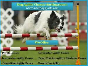 Dog Agility Lessons: Puppy, Introductory & Advanced