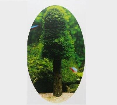 "Moos-Baum ""Christmas tree""  inkl. GRATIS-MOOS (Aquarium Aquascaping Moos)"