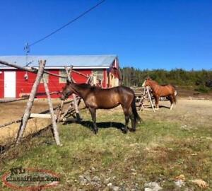 Looking for A Hobby Farm here is the perfect place for you