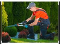 Garden cleaning for less ‼️‼️