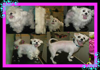 Dog Grooming In N.W Bowness