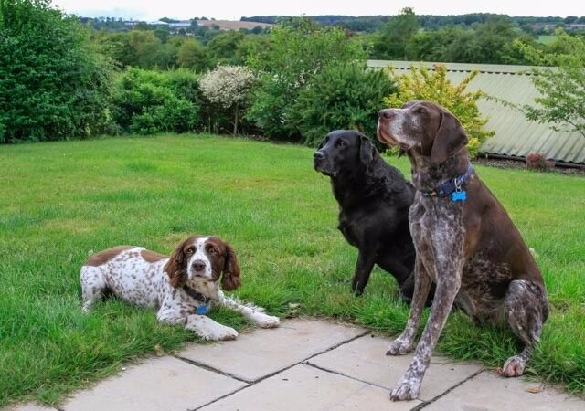 Canine Behaviour and Psychology Practitioner