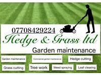 Hedge & Grass ltd Garden Maintenance