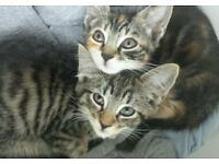 Clean kittens