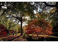 Autumn Tree Identification and Tree Lore Walk (Saturday 24th September)