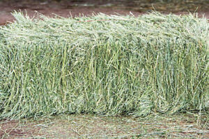 Baled hay and small animal treats shipped to your door!
