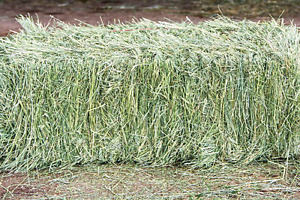 Looking for square bales of HORSE hay, maybe rounds.