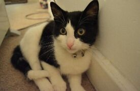 Rehome black and white cat