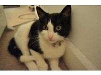 Rehome Black and white cat asap