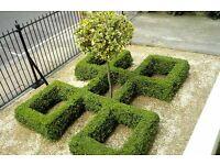 Reliable Gardener - Garden maintenance - Islington