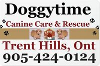 Dog Boarding with Doggytime ~ Canine Care & Rescue
