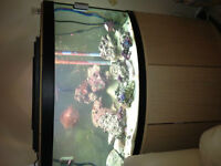 salt water tank with everything must go