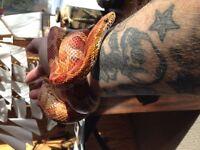 Serpent ou autre reptile