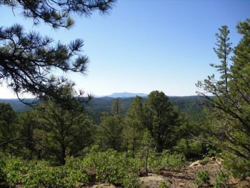 Изображение товара 40 Acres Wooded Colorado Land 4 Sale. Las Animas County. Roads to Property Ranch