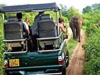 15 DAYS NATURE & WILDLIFE EXPEDITION - SRI LANKA US $2200