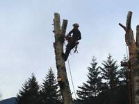 TREE REMOVALS, HEDGE TRIMMING, PRUNING - RELIABLE AND AFFORDABLE
