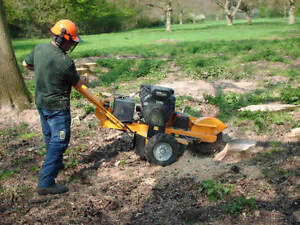Afforable Stump Removal / Stump Grinding Service