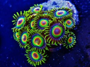 Tons of Frags and corals