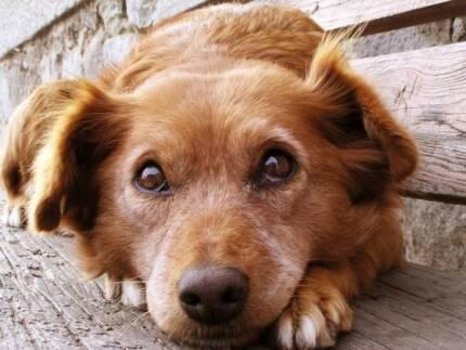 Ngunnawal: Hummel's Pet Care Ngunnawal Gungahlin Area Preview