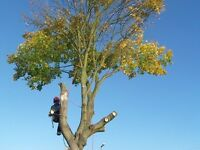 Tree Trimming , chopping, dismantling & removal 10% off all prices from now till end of November