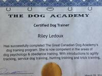Professional Dog Walking/Training