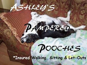Ashley's Pampered Pooches- Overnight, Walks, Check-Ins (Insured)