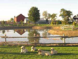 Dog Boarding and Daycare-Countryside Kennels-Amherstburg
