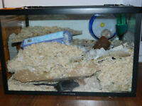 2FT GERBIL CAGE