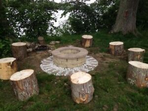 """Wanted: tree """"stumps"""" for outdoor seating"""