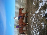 Horsemanship and Riding Lessons