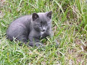 Adorable Male Kitten for Adoption in Kakabeka Falls